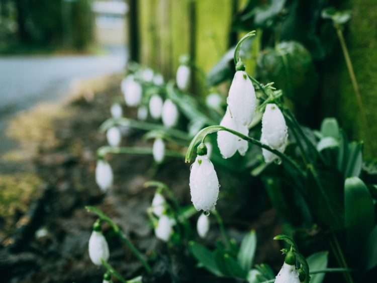 selective focus photography of white petaled flowers beside fence