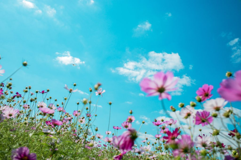 what are the steps you can take to clean your emotions this spring?
